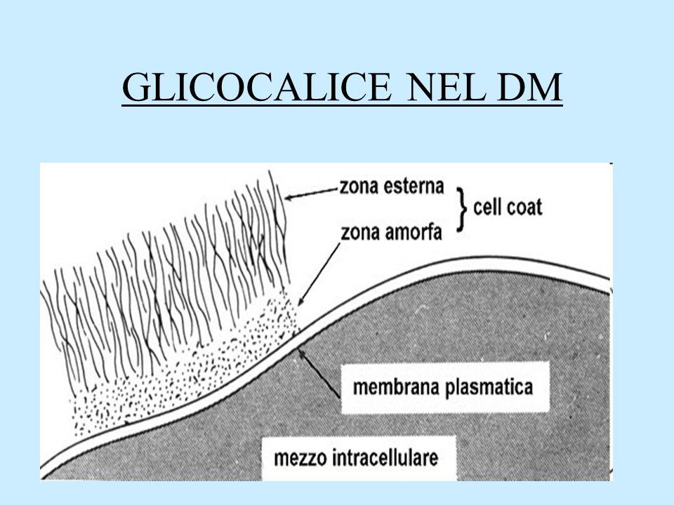 GLICOCALICE NEL DM