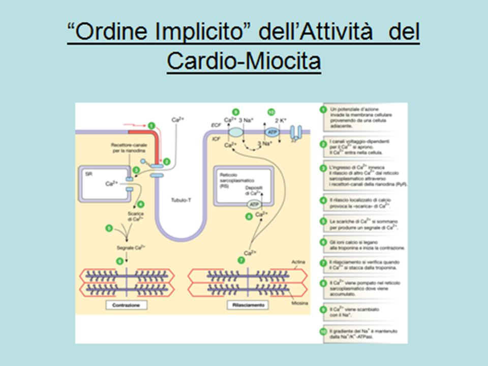 Sostanza fondamentale amorfa composta da macromolecole proteiche e GAGs, (glicocalice cellulare).