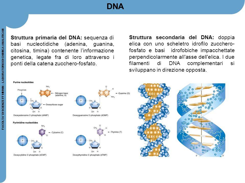 FACOLTA' DI SCIENZE FF MM NN – LABORATORIO DI CHIMICA ANALITICAIII Stabilità del DNA: La doppia elica è stabilizzata dalla formazione di legami ad idrogeno tra le basi presenti sui filamenti opposti secondo lo schema A-T e G-C: DNA
