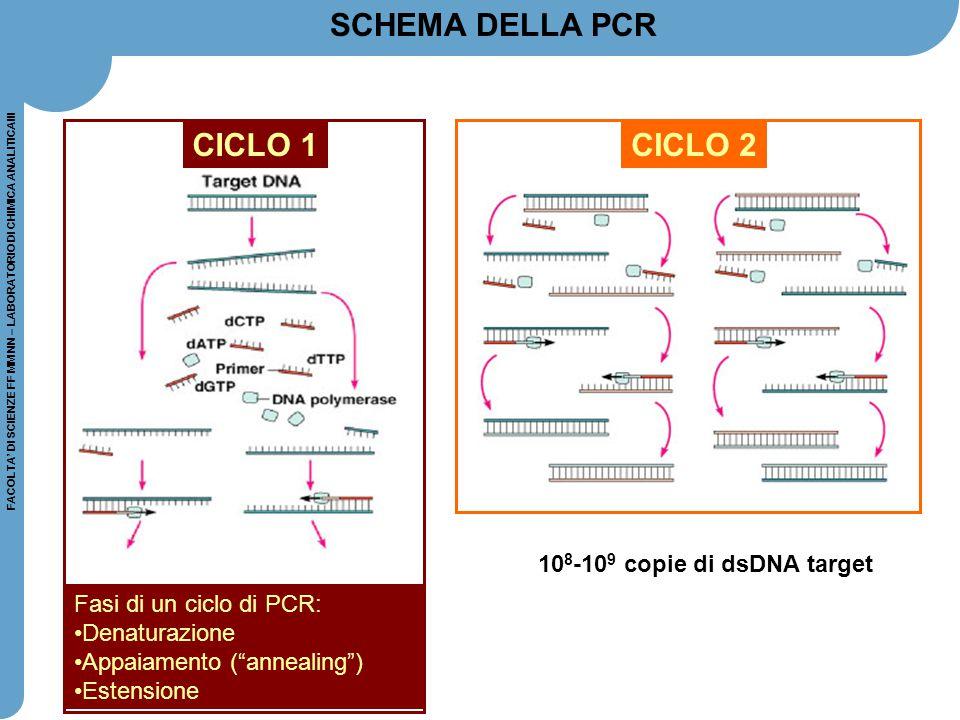 FACOLTA' DI SCIENZE FF MM NN – LABORATORIO DI CHIMICA ANALITICAIII CICLO 2 SCHEMA DELLA PCR 10 8 -10 9 copie di dsDNA target CICLO 1 Fasi di un ciclo