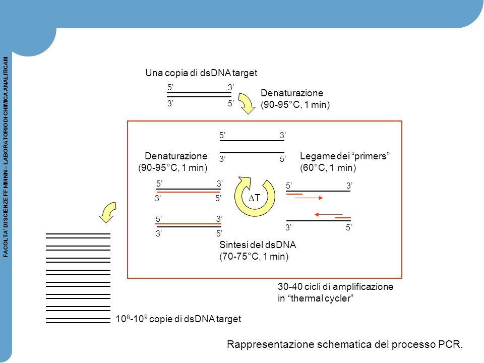 FACOLTA' DI SCIENZE FF MM NN – LABORATORIO DI CHIMICA ANALITICAIII 5' 3' 3' 5' 5' 3' 3' 5' 5' 3' 3' 5' 5' 3' 3' 5' 5' 3' Denaturazione (90-95°C, 1 min