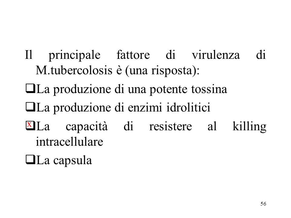 56 Il principale fattore di virulenza di M.tubercolosis è (una risposta):  La produzione di una potente tossina  La produzione di enzimi idrolitici
