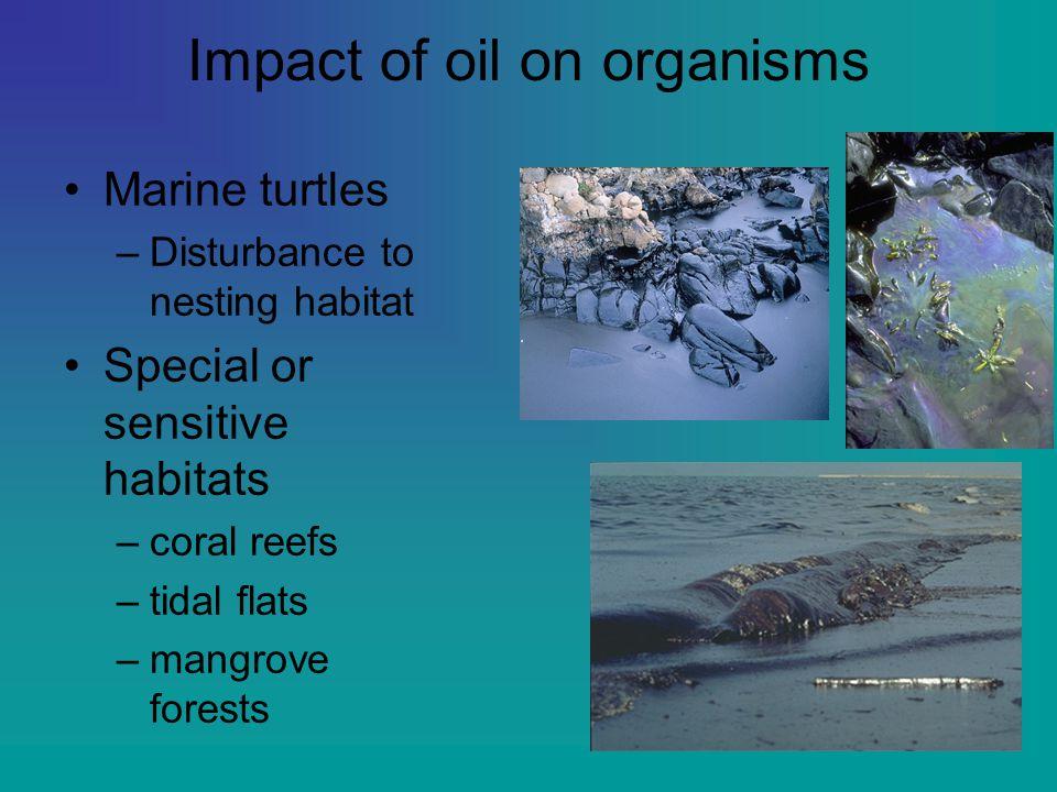Impact of oil on organisms Marine turtles –Disturbance to nesting habitat Special or sensitive habitats –coral reefs –tidal flats –mangrove forests
