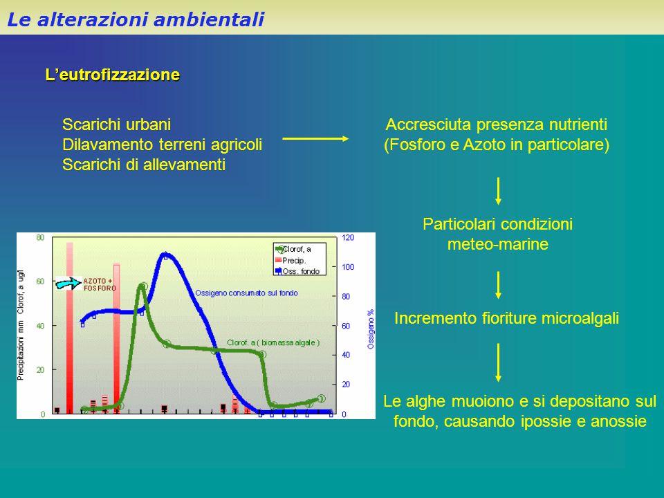 L'eutrofizzazione Le alterazioni ambientali Scarichi urbani Dilavamento terreni agricoli Scarichi di allevamenti Accresciuta presenza nutrienti (Fosfo
