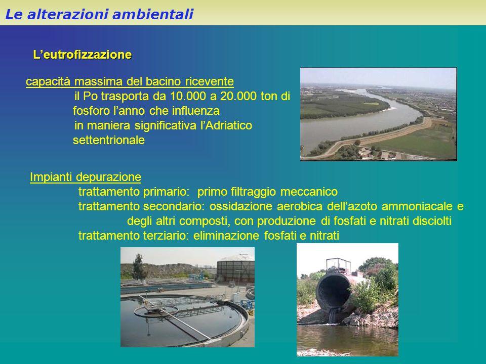 L'eutrofizzazione Le alterazioni ambientali capacità massima del bacino ricevente il Po trasporta da 10.000 a 20.000 ton di fosforo l'anno che influen