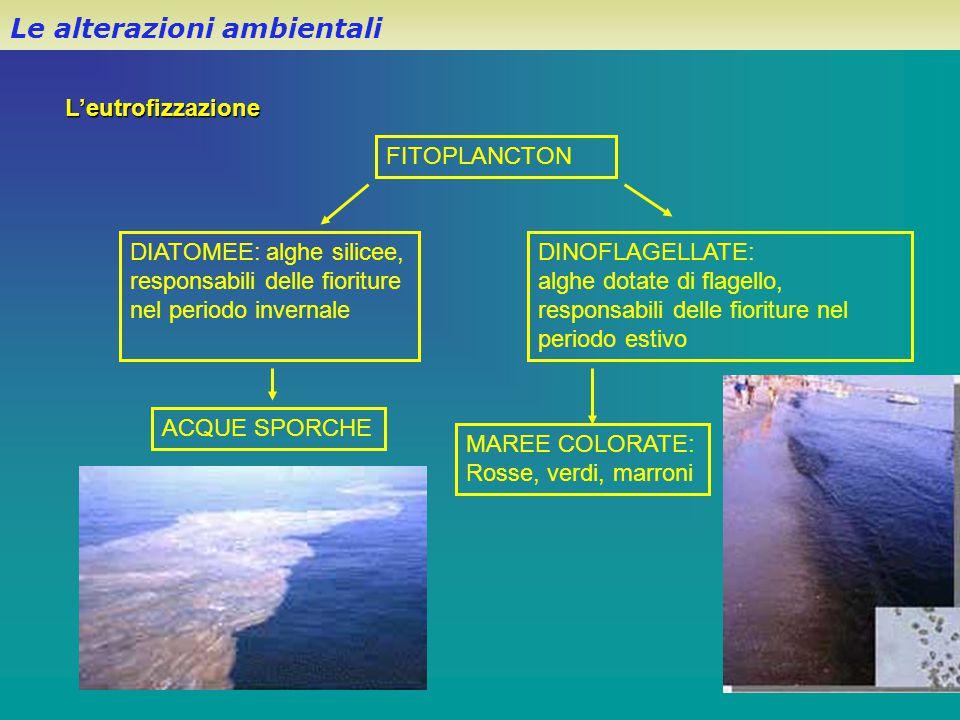 L'eutrofizzazione Le alterazioni ambientali FITOPLANCTON DIATOMEE: alghe silicee, responsabili delle fioriture nel periodo invernale DINOFLAGELLATE: a