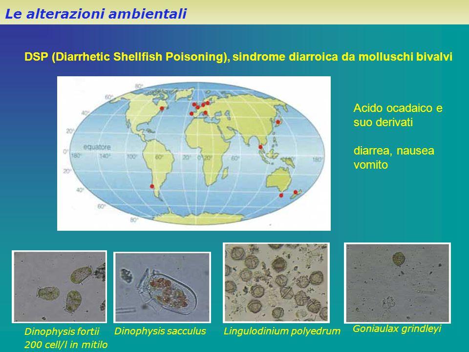 DSP (Diarrhetic Shellfish Poisoning), sindrome diarroica da molluschi bivalvi Dinophysis fortii 200 cell/l in mitilo Dinophysis sacculusLingulodinium