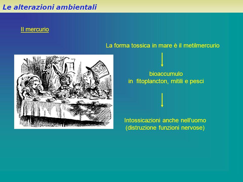 Le alterazioni ambientali Il mercurio La forma tossica in mare è il metilmercurio Intossicazioni anche nell'uomo (distruzione funzioni nervose) bioacc