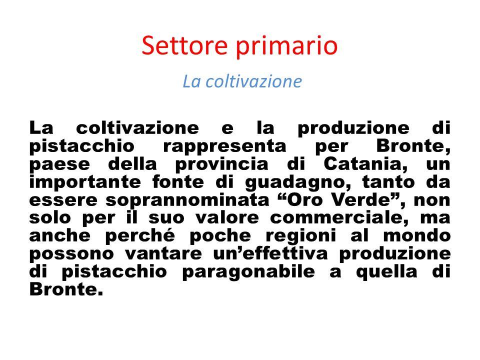 Settore primario La coltivazione La coltivazione e la produzione di pistacchio rappresenta per Bronte, paese della provincia di Catania, un importante