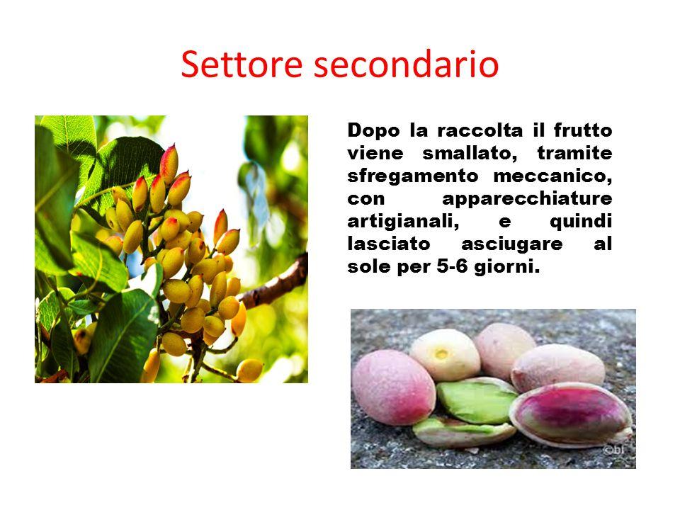 Settore secondario Dopo la raccolta il frutto viene smallato, tramite sfregamento meccanico, con apparecchiature artigianali, e quindi lasciato asciug