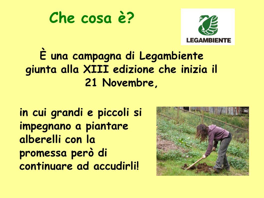 Che cosa è? È una campagna di Legambiente giunta alla XIII edizione che inizia il 21 Novembre, in cui grandi e piccoli si impegnano a piantare alberel