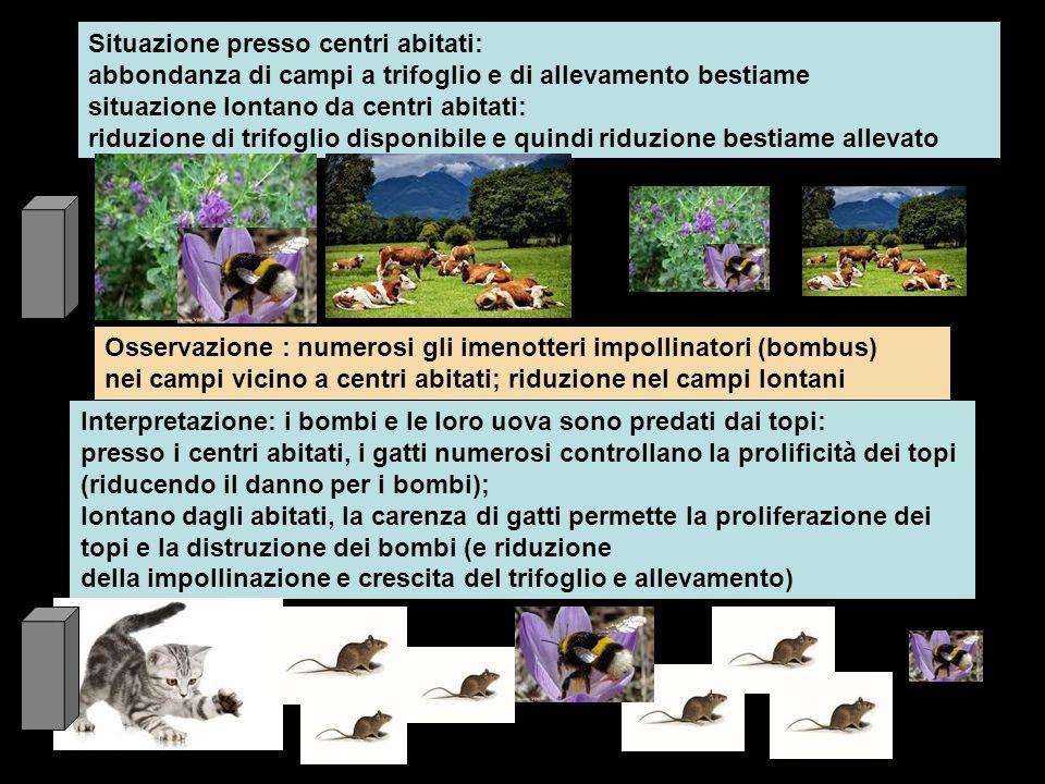 Piantagione di canna da zucchero invasa e danneggiata da topi predati da serpente giallo Immissione di formica predatrice dei giovani topi nei nidi: ridotta efficacia su topi e proliferazione delle formiche con danni rilevanti dovuti alla loro presenza Immissione del furetto per combattere i topi, ma diventa preda dei serpenti Immissione di un rospo che si alimentò di insetti più che di topi e portò a morte cani che si avvelenavano mordendolo Immissione della mangusta che si mostrò molto efficiente nel predare topi, merli, colombi, serpenti, lucertole, conigli, cani, gatti La scomparsa delle lucertole favorì la proliferazione dei maggiolini che portarono gravi danni corrodendo le radici delle canne Danni derivati con la immissione delle manguste in isole delle Antille