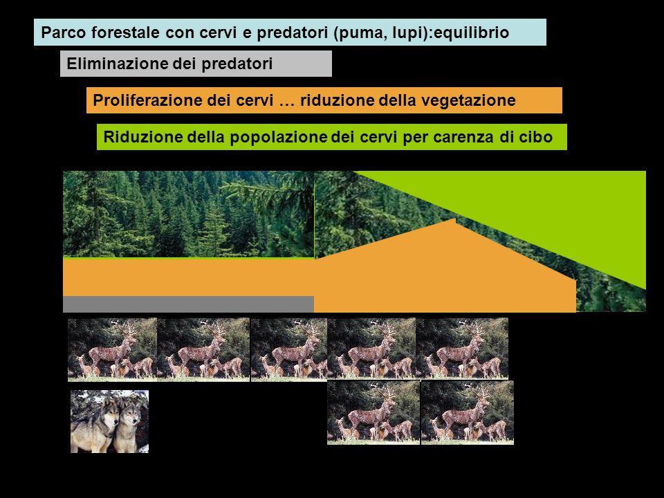 Parco forestale con cervi e predatori (puma, lupi):equilibrio Eliminazione dei predatori Proliferazione dei cervi … riduzione della vegetazione Riduzi