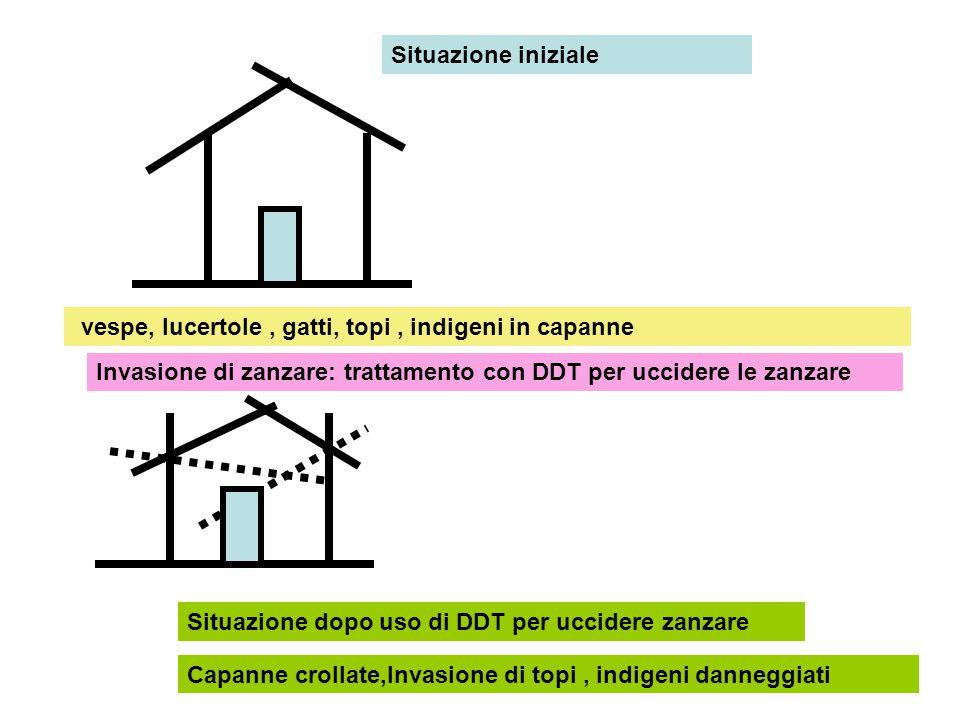 DDT uccide le zanzare e le vespe che si nutrivano di tarli del legno sul tetto I tarli proliferano e il tetto cade I gatti che mangiavano le lucertole e i topi, muoiono perché le lucertole sono avvelenate I topi proliferano in assenza dei gatti Interpretazione del fenomeno
