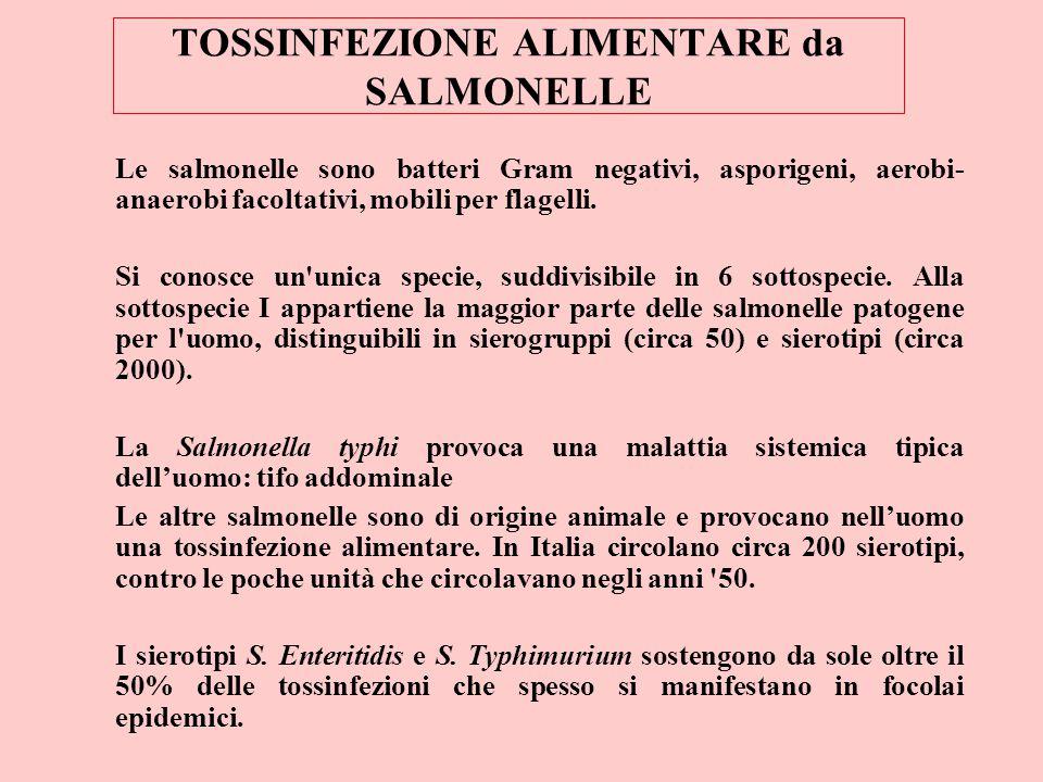 TOSSINFEZIONE ALIMENTARE da SALMONELLE Le salmonelle sono batteri Gram negativi, asporigeni, aerobi- anaerobi facoltativi, mobili per flagelli. Si con