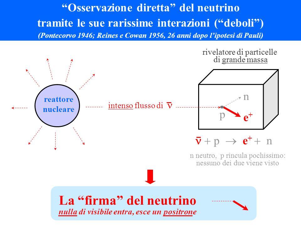 Osservazione diretta del neutrino tramite le sue rarissime interazioni ( deboli ) (Pontecorvo 1946; Reines e Cowan 1956, 26 anni dopo l'ipotesi di Pauli) La firma del neutrino nulla di visibile entra, esce un positrone rivelatore di particelle di grande massa p n e+e+  p  e +  n reattore nucleare n neutro, p rincula pochissimo: nessuno dei due viene visto intenso  flusso di