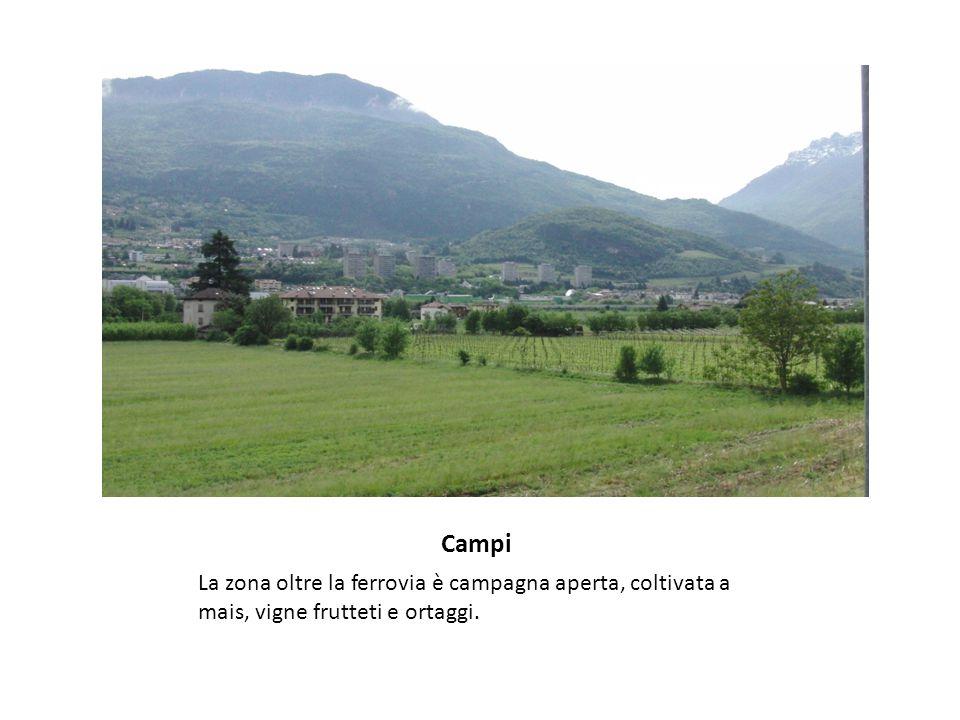 Campi La zona oltre la ferrovia è campagna aperta, coltivata a mais, vigne frutteti e ortaggi.