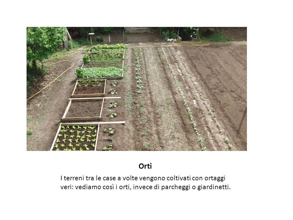 Orti I terreni tra le case a volte vengono coltivati con ortaggi veri: vediamo così i orti, invece di parcheggi o giardinetti.