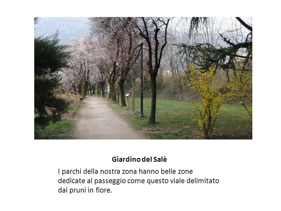 Giardino del Salè I parchi della nostra zona hanno belle zone dedicate al passeggio come questo viale delimitato dai pruni in fiore.