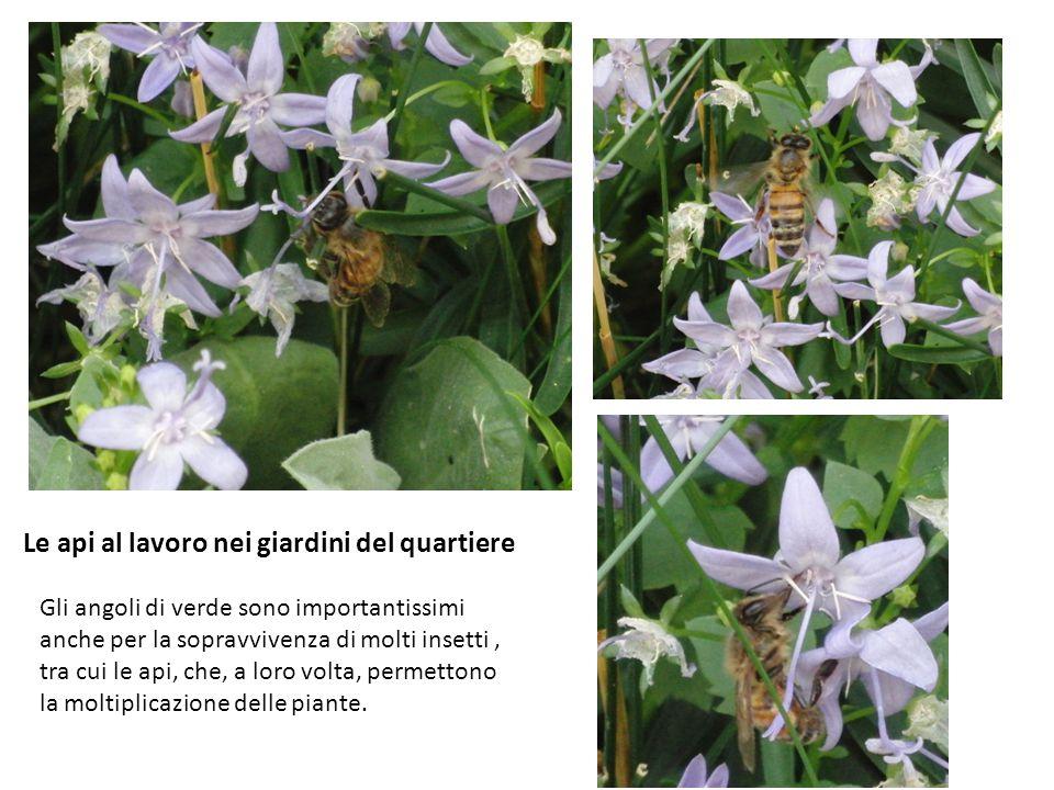 Le api al lavoro nei giardini del quartiere Gli angoli di verde sono importantissimi anche per la sopravvivenza di molti insetti, tra cui le api, che, a loro volta, permettono la moltiplicazione delle piante.