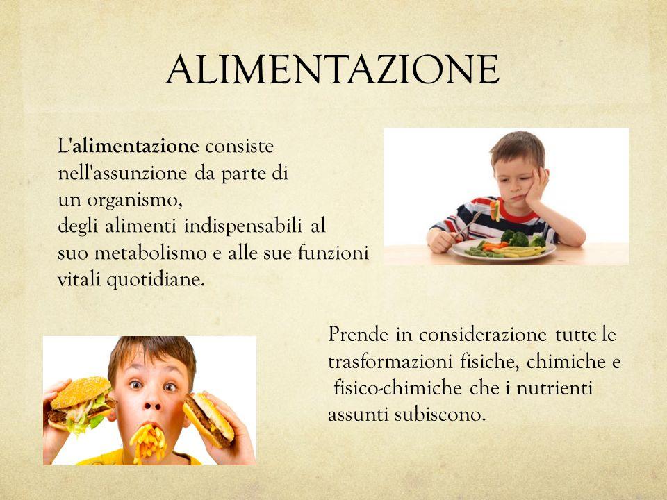 ALIMENTAZIONE L alimentazione consiste nell assunzione da parte di un organismo, degli alimenti indispensabili al suo metabolismo e alle sue funzioni vitali quotidiane.