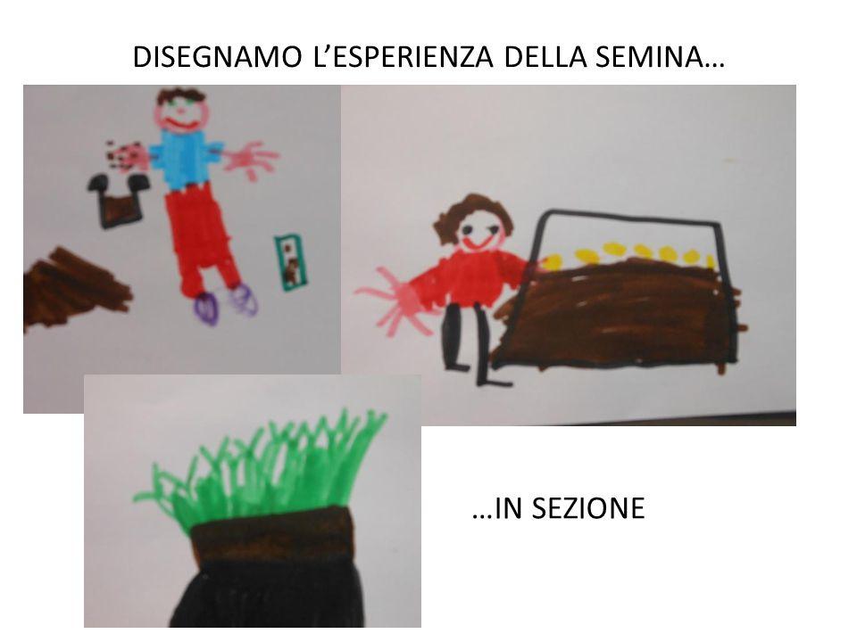 DISEGNAMO L'ESPERIENZA DELLA SEMINA… …IN SEZIONE