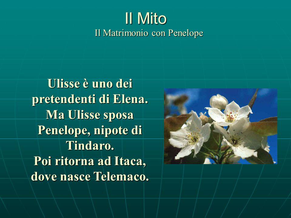 Il Mito Ulisse è uno dei pretendenti di Elena. Ma Ulisse sposa Penelope, nipote di Tindaro.