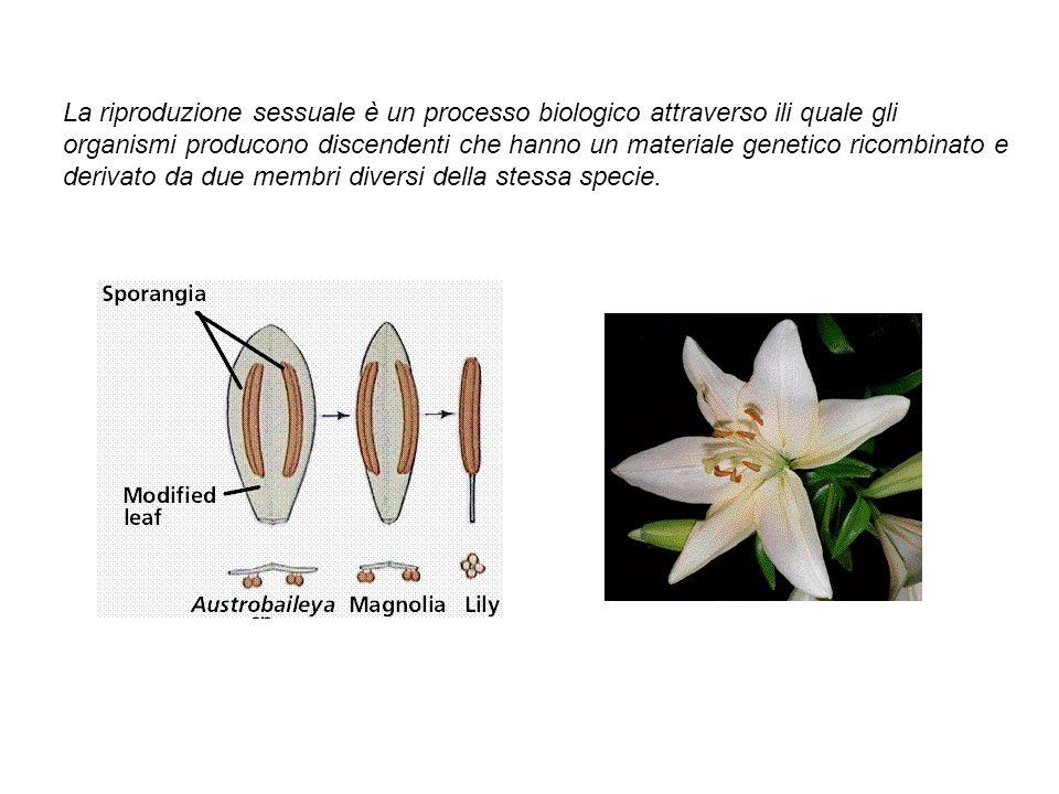 La riproduzione sessuale è un processo biologico attraverso ili quale gli organismi producono discendenti che hanno un materiale genetico ricombinato