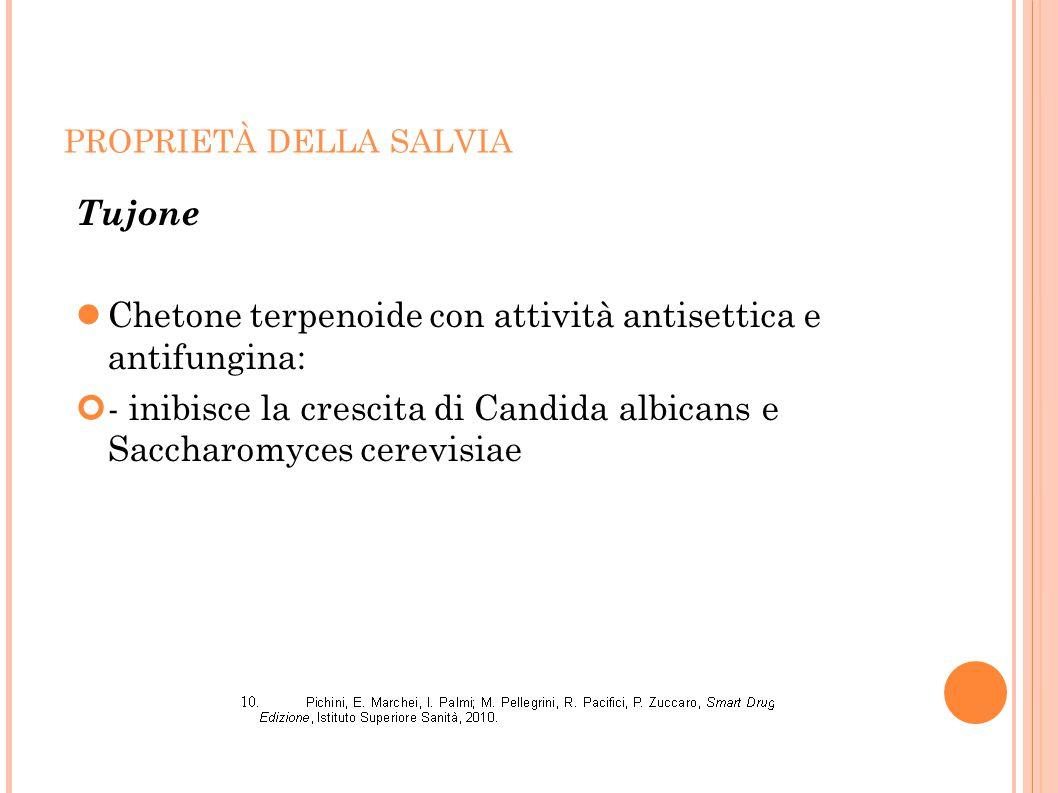 PROPRIETÀ DELLA SALVIA Tujone Chetone terpenoide con attività antisettica e antifungina: - inibisce la crescita di Candida albicans e Saccharomyces ce