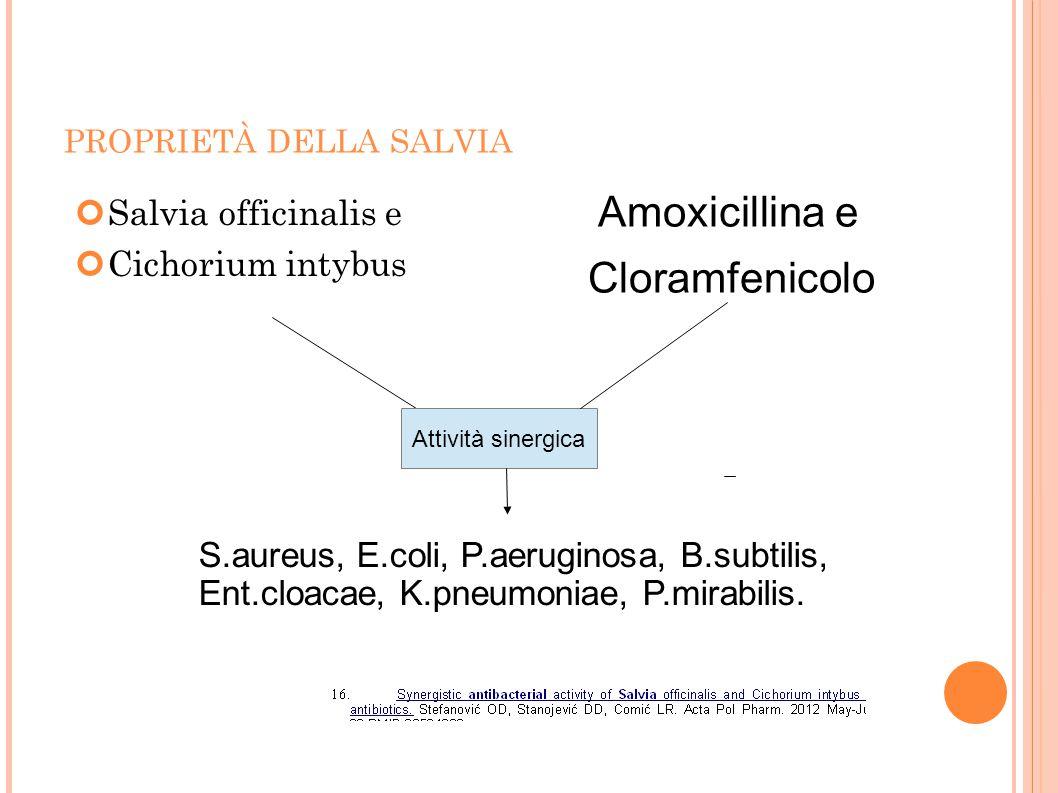 PROPRIETÀ DELLA SALVIA Salvia officinalis e Cichorium intybus Amoxicillina e Cloramfenicolo Attività sinergica S.aureus, E.coli, P.aeruginosa, B.subti