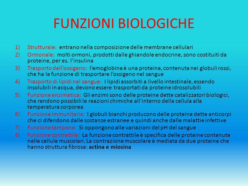 FUNZIONI BIOLOGICHE 1)Strutturale: entrano nella composizione delle membrane cellulari 2)Ormonale: molti ormoni, prodotti dalle ghiandole endocrine, s
