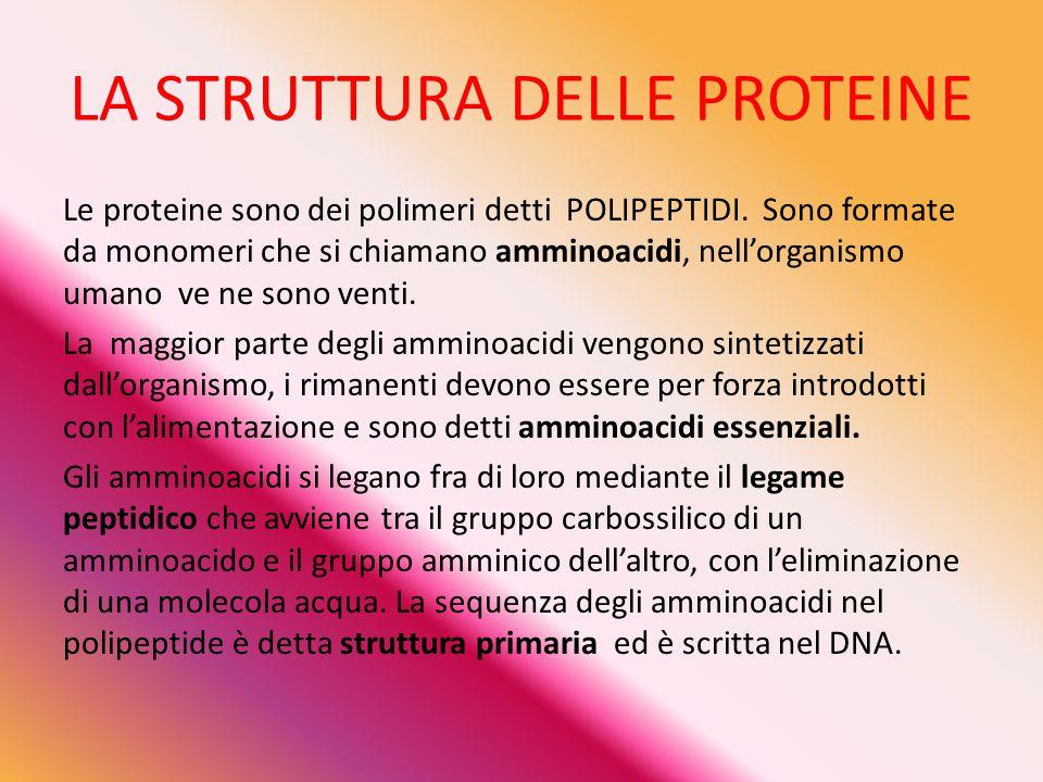 LA STRUTTURA DELLE PROTEINE Le proteine sono dei polimeri detti POLIPEPTIDI. Sono formate da monomeri che si chiamano amminoacidi, nell'organismo uman