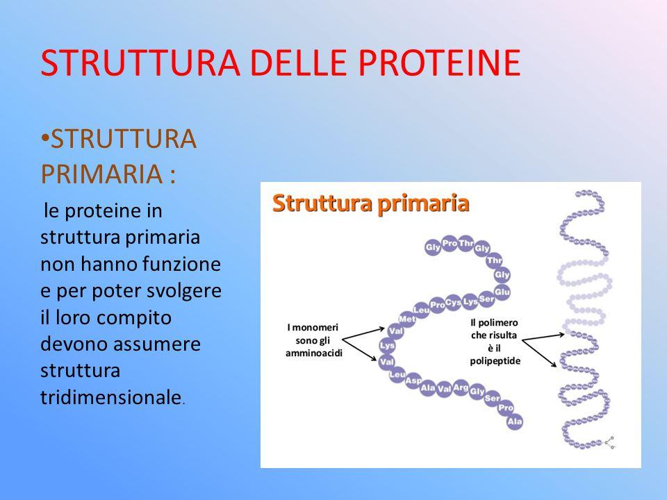 STRUTTURA DELLE PROTEINE STRUTTURA PRIMARIA : le proteine in struttura primaria non hanno funzione e per poter svolgere il loro compito devono assumer