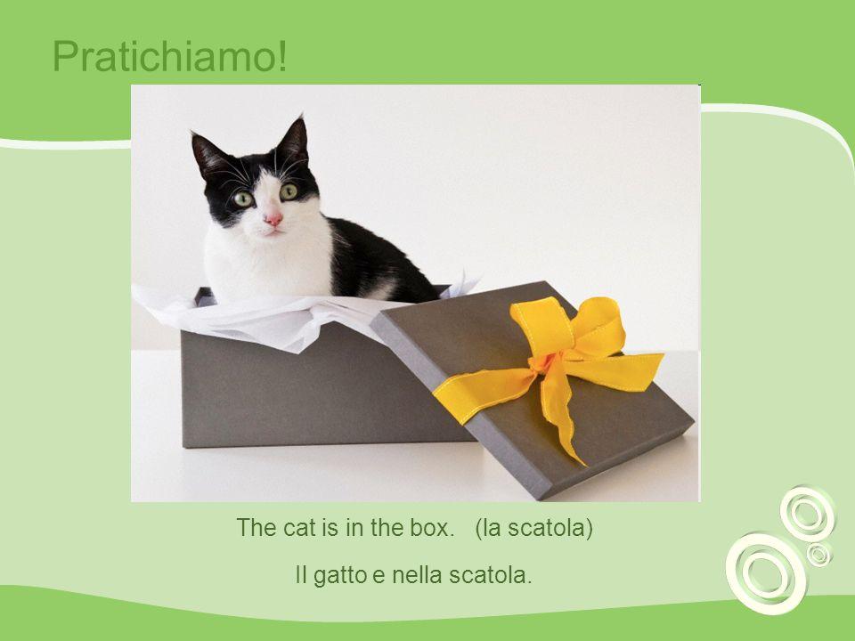Pratichiamo! The cat is in the box. (la scatola) Il gatto e nella scatola.