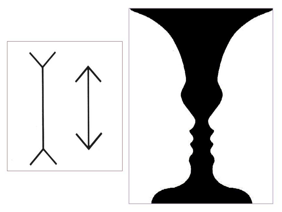 La rappresentazione costituisce la riattivazione di percezioni passate, in assenza degli stimoli che le avevano provocate.