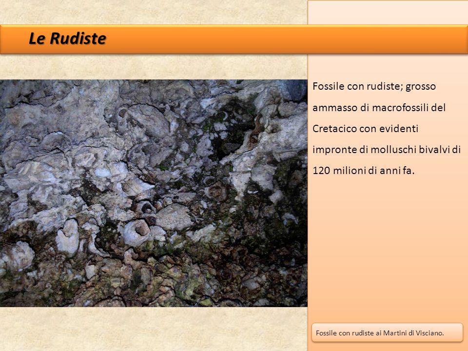 Le Rudiste Fossile con rudiste; grosso ammasso di macrofossili del Cretacico con evidenti impronte di molluschi bivalvi di 120 milioni di anni fa. Fos