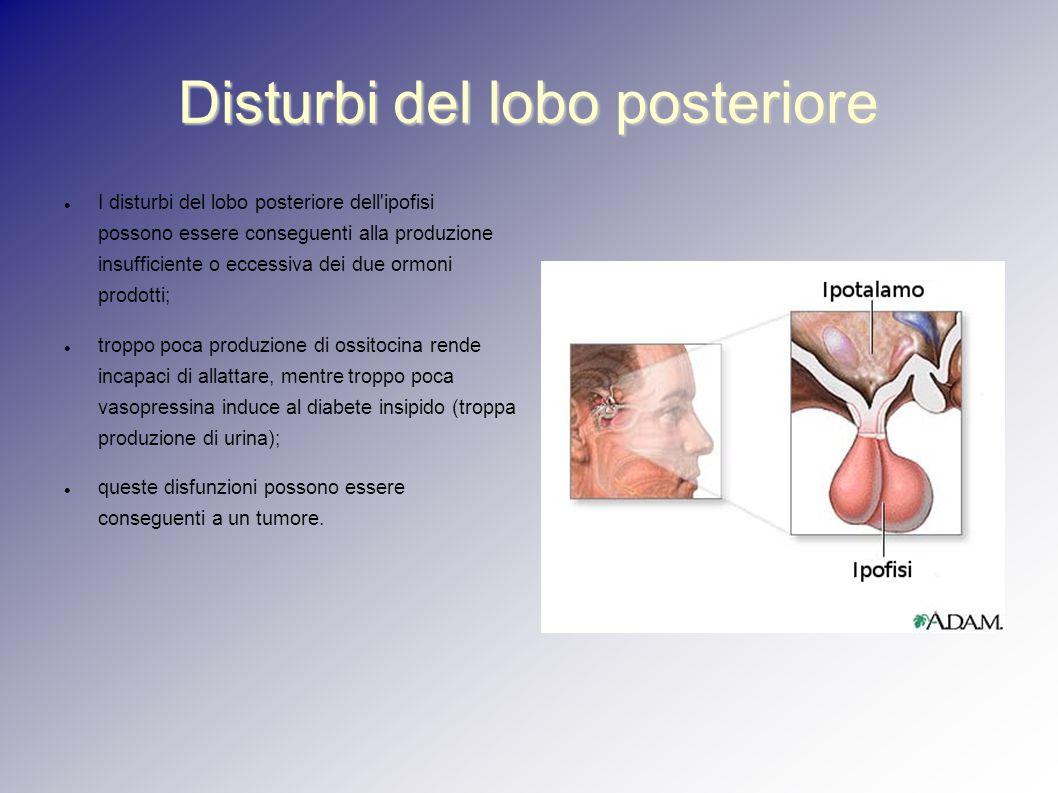 Disturbi del lobo posteriore I disturbi del lobo posteriore dell'ipofisi possono essere conseguenti alla produzione insufficiente o eccessiva dei due