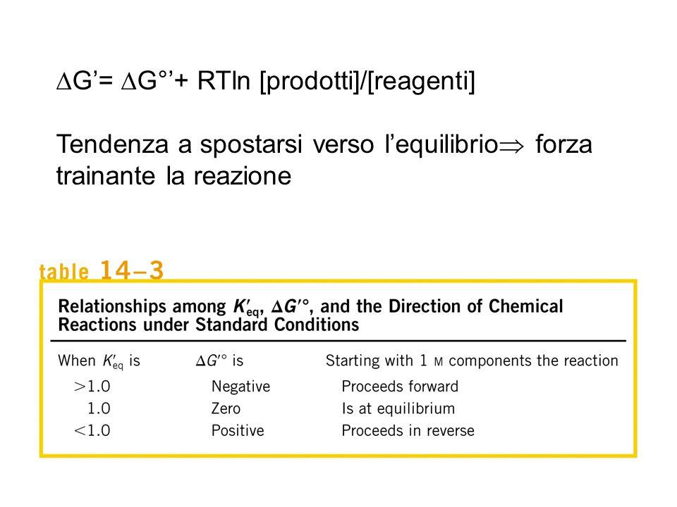  G'=  G°'+ RTln [prodotti]/[reagenti] Tendenza a spostarsi verso l'equilibrio  forza trainante la reazione
