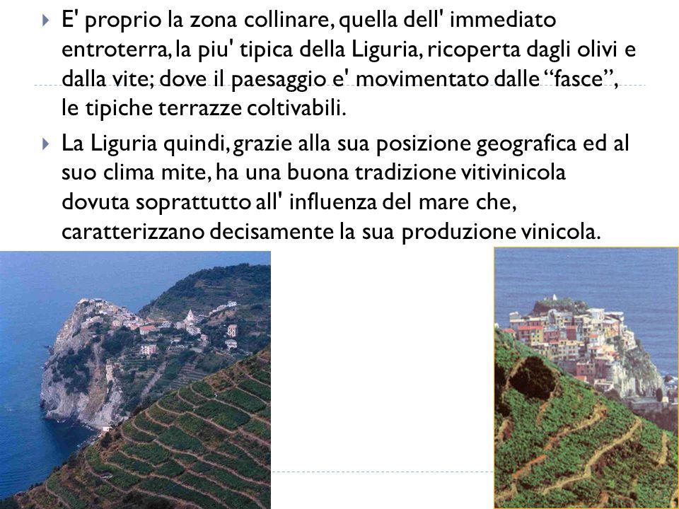  E' proprio la zona collinare, quella dell' immediato entroterra, la piu' tipica della Liguria, ricoperta dagli olivi e dalla vite; dove il paesaggio