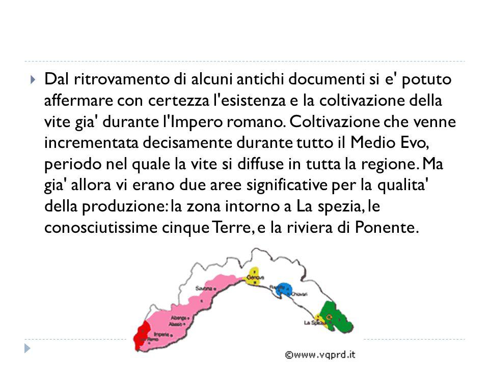 Dal ritrovamento di alcuni antichi documenti si e' potuto affermare con certezza l'esistenza e la coltivazione della vite gia' durante l'Impero roma