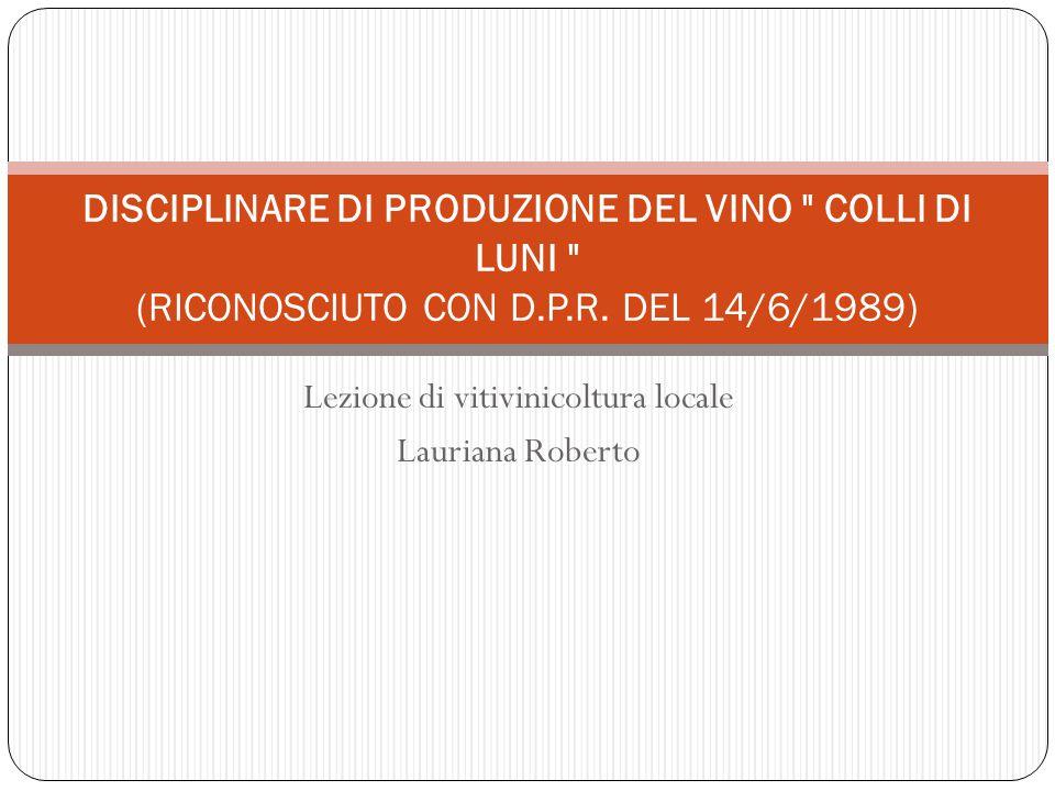 Lezione di vitivinicoltura locale Lauriana Roberto DISCIPLINARE DI PRODUZIONE DEL VINO