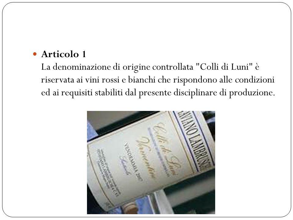 Articolo 2 La denominazione COLLI DI LUNI ROSSO è riservata al vino, ottenuto dalle uve provenienti da vigneti aventi, nell ambito aziendale, la seguente composizione dei vitigni: § Sangiovese dal 60% al 70%; § Canaiolo e/o Pollera nera e/o Ciliegiolo nero, almeno il 15%.