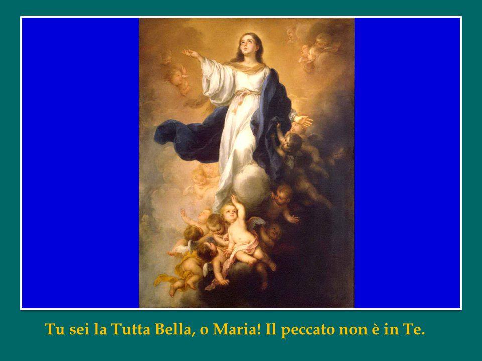 Vergine Santa e Immacolata, a Te, che sei l'onore del nostro popolo e la custode premurosa della nostra città, ci rivolgiamo con confidenza e amore.