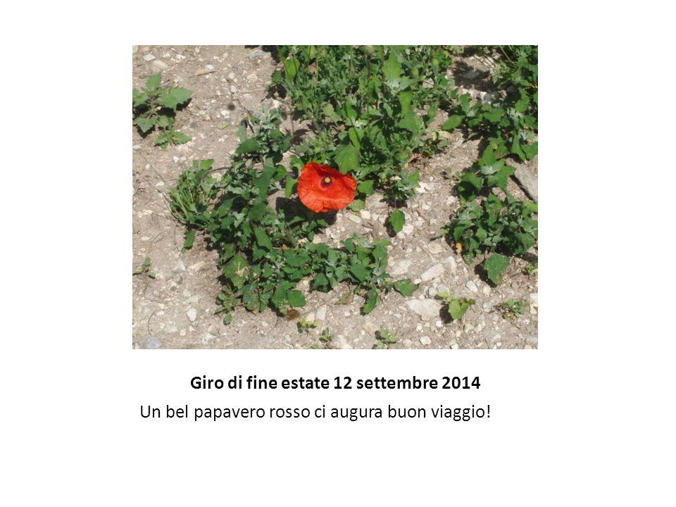 Giro di fine estate 12 settembre 2014 Un bel papavero rosso ci augura buon viaggio!