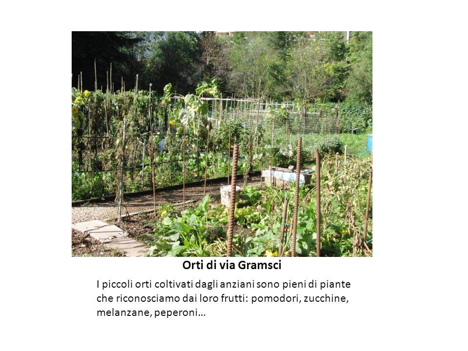 Orti di via Gramsci I piccoli orti coltivati dagli anziani sono pieni di piante che riconosciamo dai loro frutti: pomodori, zucchine, melanzane, peperoni…