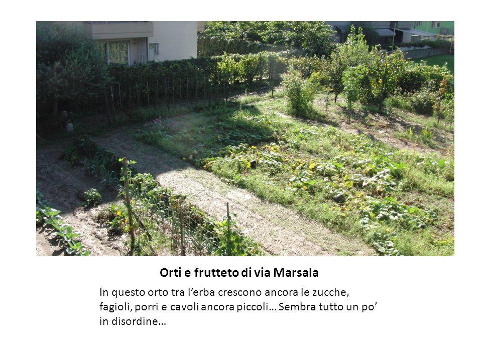Orti e frutteto di via Marsala In questo orto tra l'erba crescono ancora le zucche, fagioli, porri e cavoli ancora piccoli… Sembra tutto un po' in disordine…