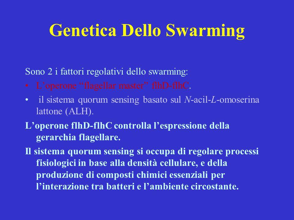 """Genetica Dello Swarming Sono 2 i fattori regolativi dello swarming: L'operone """"flagellar master"""" flhD-flhC. il sistema quorum sensing basato sul N-aci"""