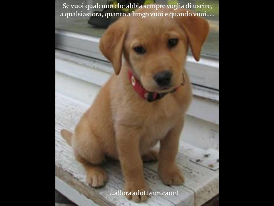 …allora adotta un cane.