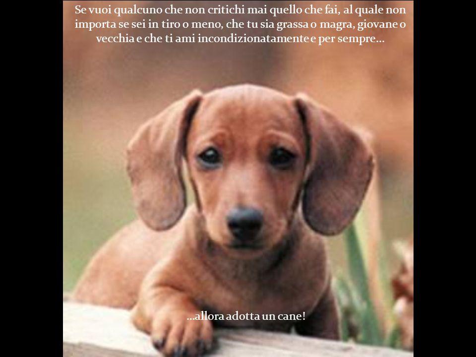 Se vuoi qualcuno che si accontenti di salire sul tuo letto solo per scaldare i tuoi piedi e che puoi spingere via quando russa… …allora adotta un cane!