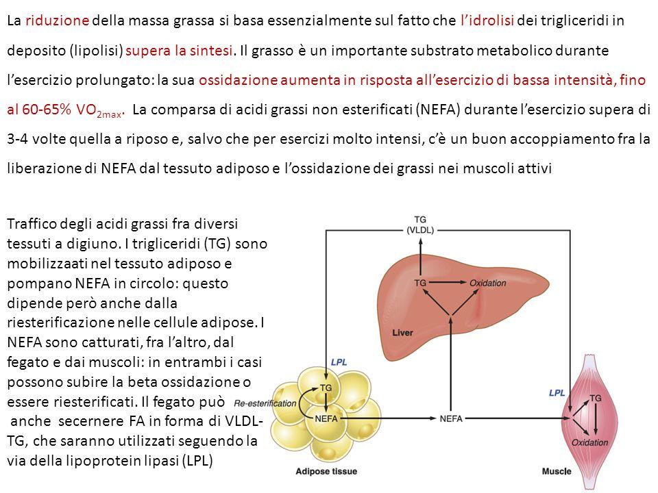 La riduzione della massa grassa si basa essenzialmente sul fatto che l'idrolisi dei trigliceridi in deposito (lipolisi) supera la sintesi.